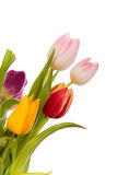 Easter tulips border Royalty Free Stock Photo