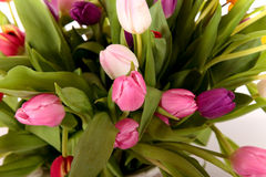 Easter tulips close up Stock Images