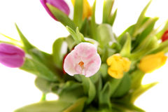 Easter tulips close up Royalty Free Stock Photo