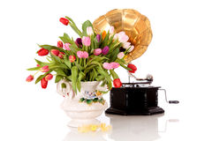 Easter tulips vase gramophone Stock Image