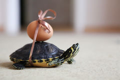 Easter turtle Stock Image