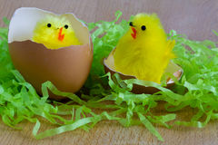 Easter - Two yellow toy chicks on wood background with shredded green paper Royalty Free Stock Images