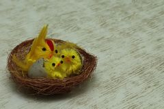 Easter. Two young Chicks and one large chick in the nest on gray background royalty free stock photo