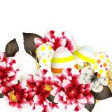 Easter vector background with eggs and flowers Stock Images