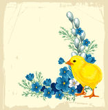 Easter vintage background. With forget-me-not and little chicken Stock Photo