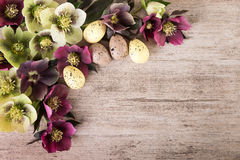 Easter vintage background of hellebore flowers on rustic stone Royalty Free Stock Photo