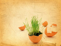 Easter Vitality Stock Photos