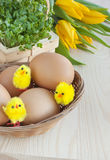 Easter, watercress, tulip flowers, eggs, toy chicks. Kitchen wooden table with spring yellow tulip flowers, eggs and water cress salad in a rustic basket royalty free stock photo