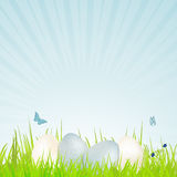 Easter white and blue speckled eggs Royalty Free Stock Photo
