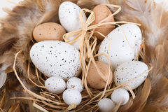 Easter eggs and basket and feathers. Easter white and brown eggs and basket and feathers Stock Images