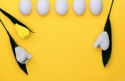 Easter white eggs in row and flowers tulips on yellow background. From above, copy space, flat lay stock photography