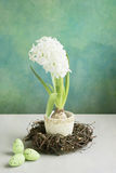 Easter white hyacinth Stock Images