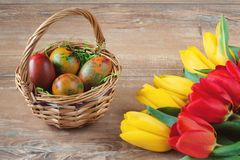 Easter wicker basket with colored eggs, yellow and red tulips on brown wooden board. Royalty Free Stock Image