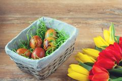 Easter wicker basket with colored eggs, yellow and red tulips on brown wooden board. Royalty Free Stock Photos