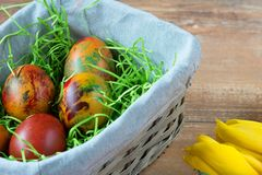 Easter wicker basket with colored eggs, yellow and red tulips on brown wooden board. stock image