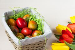 Easter wicker basket with colored eggs and yellow and red tulips on white wooden board. Stock Image