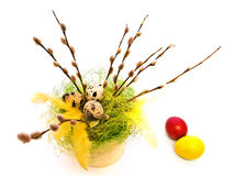 Easter willow Royalty Free Stock Photo
