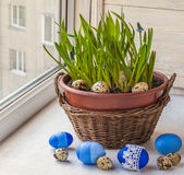 Easter window decoration with growing muscari and fritillaria in Royalty Free Stock Photography