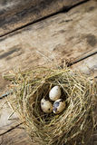 Easter wood background with nest and quail eggs Stock Images