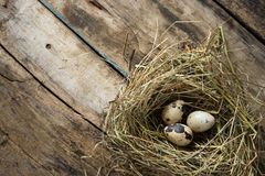 Easter wood background with nest and quail eggs Royalty Free Stock Photography