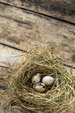 Easter wood background with nest and quail eggs Royalty Free Stock Photos