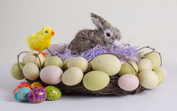 Easter Wreath, Eggs, Bunny & Chick Royalty Free Stock Image