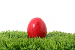 Easteregg Royalty Free Stock Images