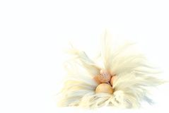 Eastereggs with feathers Stock Photos