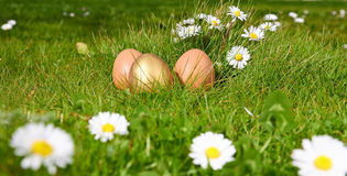 Easterl eggs on green grass Stock Image