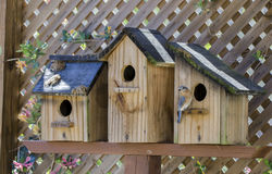Eastern Bluebird bird nest box garden arbor birdhouses. Eastern Bluebird thrush, Sialia sialis, birdhouse nest box, garden arbor birdhouses. Athens, Georgia, USA Royalty Free Stock Image