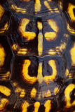 Eastern Box Turtle Shell Royalty Free Stock Images