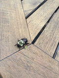 eastern carpenter bee Stock Image