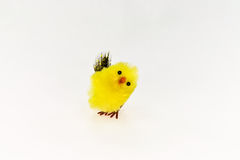 Eastern chicken. Little eastern chicken in funny colour Royalty Free Stock Image