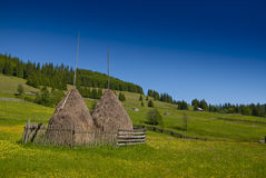 Eastern european mountain scenery. In summer with haystacks and pasture with yellow flowers Stock Photography