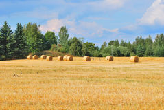 Eastern Finland. Beautiful landscape of Eastern Finland in the late summer stock photography