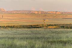 Eastern Free State landscape in South Africa Stock Photo