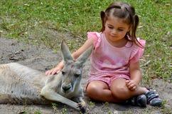 Eastern grey kangaroo female. Little girl (age 04) petting an Eastern grey kangaroo female in Gold Coast Queensland, Australia Stock Images