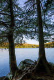 Eastern Hemlocks Silhouetted on an Autumn Lake - Ontario, Canada Royalty Free Stock Images