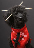 Eastern Inspired Dog with Chopsticks Stock Photo