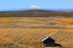 Eastern Oregon Harvest. Eastern Oregon farmland showing harvested wheat rows with snow capped Mt Hood in the distance, and an old shed in the foreground.  Clear Stock Images