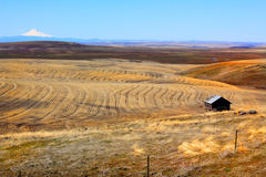 Eastern Oregon Ranch Land. Distant view of eastern Oregon ranch land showing harvested wheat rows with snow capped Mt Hood in the distance, and an old shed in royalty free stock image