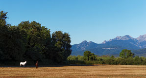 Eastern plain of Corsica Royalty Free Stock Photography