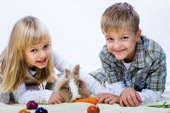 Eastern rabbit Stock Photos