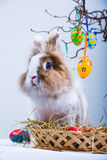 Eastern rabbit. A eastern rabbit and a basket with eggs Royalty Free Stock Images