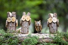 Eastern Screech Owl. An Eastern Screech Owl posing with some of his woodland friends Stock Photos