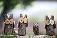 Eastern Screech Owl. An Eastern Screech Owl posing with some of his woodland friends Stock Image