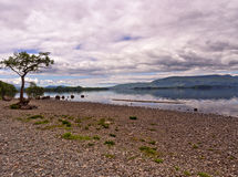 Eastern shores loch lomoind Stock Photo
