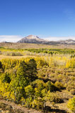 Eastern Sierra Aspen Color Royalty Free Stock Photography