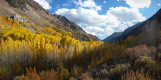 Eastern Sierra Aspens. View up Bishop Creek Canyon showing yellow, green and orange aspens Stock Photography
