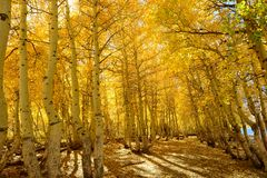 Eastern Sierra Fall Color Stock Images